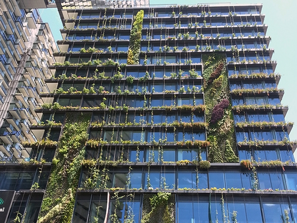 202020 Vision Green Projects Green Roofs Australasia