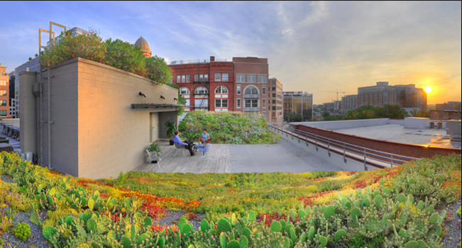 The green roof on the American Society of Landscape Architects headquarters