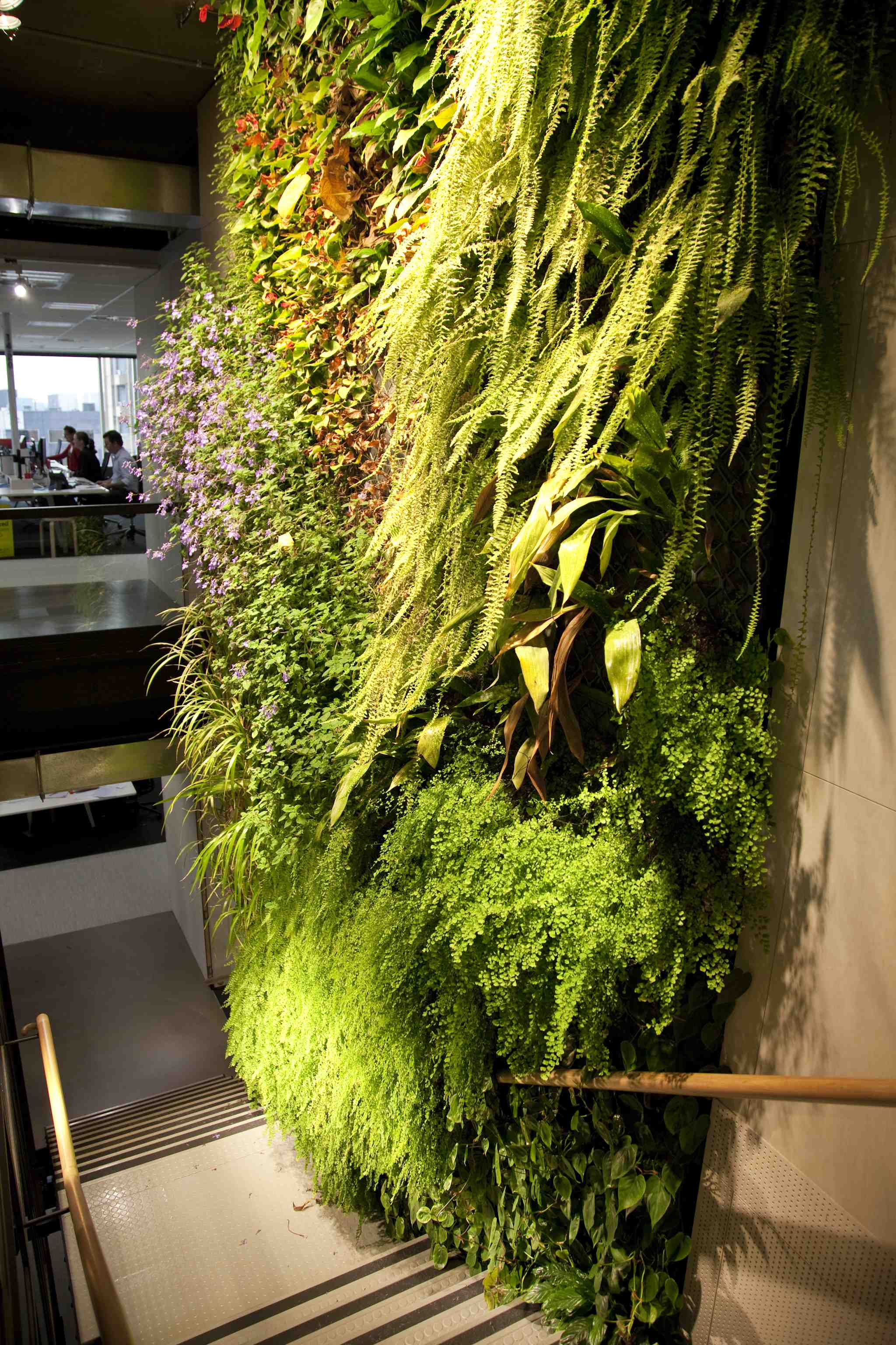 Fine Living Wall Gardens Melbourne Illustration - Wall Painting ...