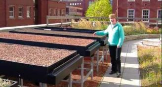 Green Roof Research at Shelfied
