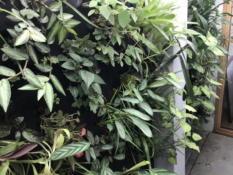 Geckoplantscapes Rozelle Greenwall