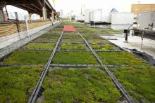 green-roof-Australia-GRA-news