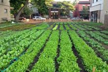 urban-farming-australia