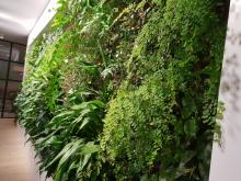 location 257 Collins St, Melbourne client Hallmarc project builder Hallmarc design & install Fytogreen Australia completion July 2017 10m2 Internal Florafelt Vertical Garden www.fytogreen.com.au Emirates House . Melbourne Fytogreen Australia - providing sustainable solutions for the built environment