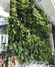 Vertical Garden, Fytogreen, Emporium Hotel, Brisbane, QLD, Greenwall, Greening the built environment, sustainable greening, biofilia, Florafelt, Commercial Green Walls, Neon Signs