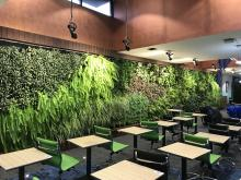 Green spaces in educational setting - Evergreen Infrastructure