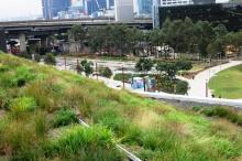 native grass green roof