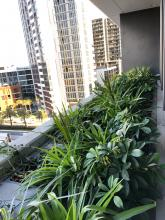 Wentworth Point Marina, 355LM PLanter Boxes by Fytogreen, Greening the Built Environment