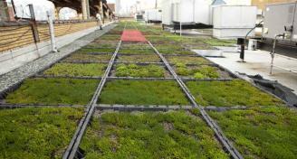 green-roof-Australia-GRA-news