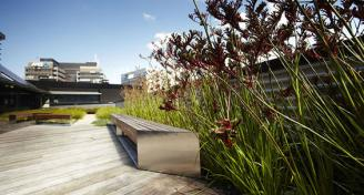 Kangan-Institute-green-roof-project